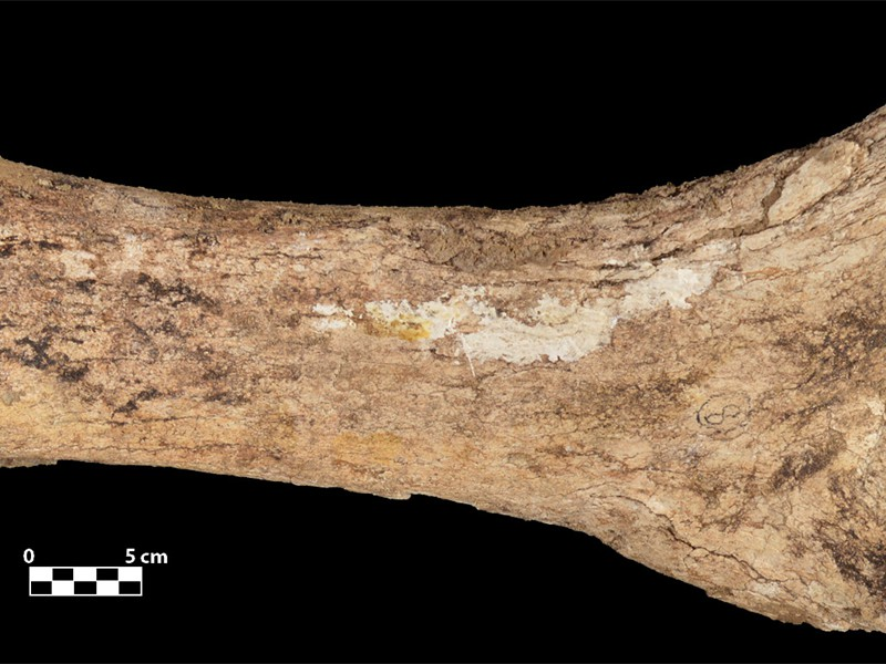 WA322 Colby mammoth bone